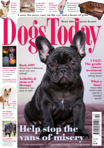 Dogs Today Magazine Digital Issue