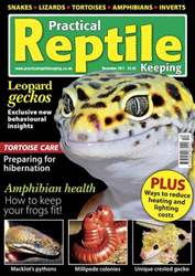 No.31 Leopard Geckos issue No.31 Leopard Geckos