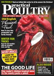 No. 145 Old English Pheasant Fowl issue No. 145 Old English Pheasant Fowl