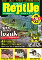 No. 83 Keeping eyed (ocellated) lizards issue No. 83 Keeping eyed (ocellated) lizards