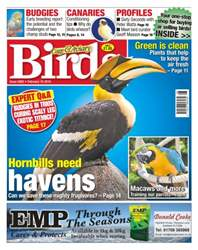 No. 5892 Hornbills need havens issue No. 5892 Hornbills need havens