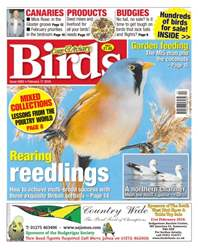No. 5893 Rearing Reedlings issue No. 5893 Rearing Reedlings