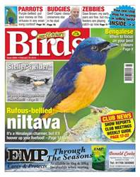 No. 5894 Rufous-bellied niltava issue No. 5894 Rufous-bellied niltava