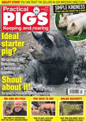 No. 23 Ideal Starter Pig? issue No. 23 Ideal Starter Pig?
