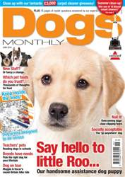 Dogs Monthly Magazine Cover