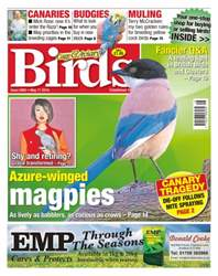 No. 5905 Azure-Winged Magpies issue No. 5905 Azure-Winged Magpies
