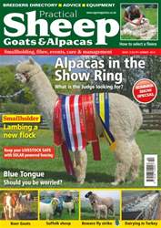 No. 13 Alpacas In The Show Ring  issue No. 13 Alpacas In The Show Ring
