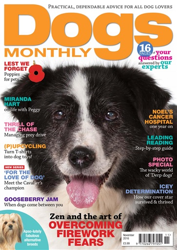 Dogs Monthly Digital Issue