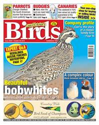 No. 5929 - Beautiful Bobwhites issue No. 5929 - Beautiful Bobwhites