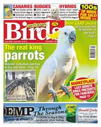 No. 5936 The Real King Parrots  issue No. 5936 The Real King Parrots