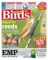 No. 5945 King Of The Reeds issue No. 5945 King Of The Reeds