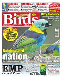 No. 5947 Rainbow Bird Nation issue No. 5947 Rainbow Bird Nation