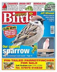 No. 5959 Our Country Sparrow issue No. 5959 Our Country Sparrow