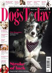 Dogs Today Magazine issue July 2017