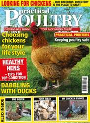 Practical Poultry issue No. 164 Looking for Chickens