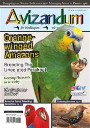 Avizandum issue October 2017