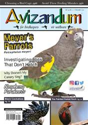 Avizandum issue November 2017