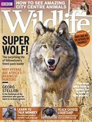 BBC Wildlife Magazine issue March 2018