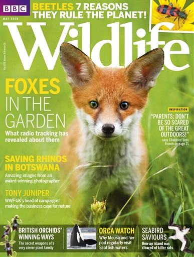 BBC Wildlife Magazine Preview