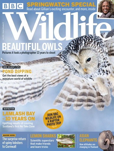 BBC Wildlife Magazine Digital Issue