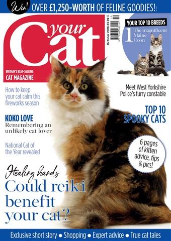 Your Cat issue Your Cat Magazine October 2018
