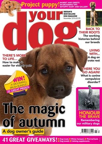 Your Dog issue Your Dog Magazine November 2018