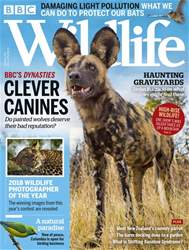 BBC Wildlife Magazine issue November 2018