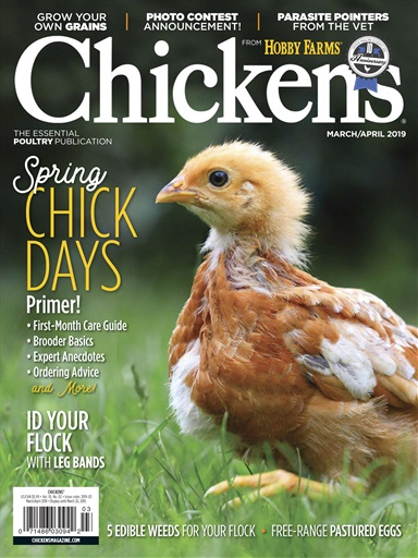 Chickens Preview