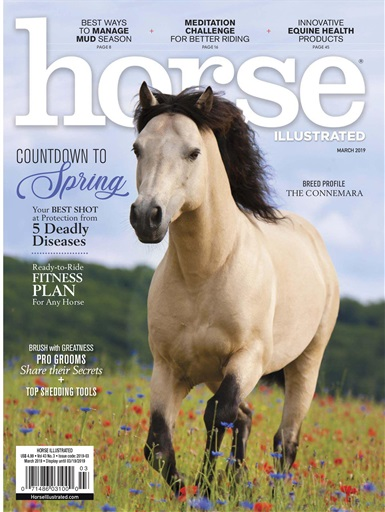Horse Illustrated Preview