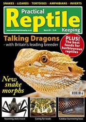 No.23 Bearded Dragons issue No.23 Bearded Dragons