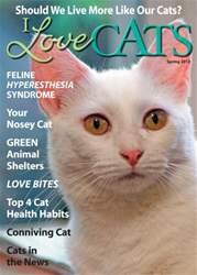 I Love Cats Magazine Cover
