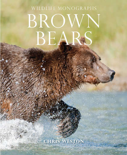 Brown Bears Preview