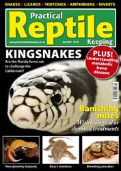 No.22 Kingsnakes issue No.22 Kingsnakes