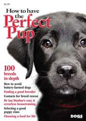 How To Have The Perfect Pup issue How To Have The Perfect Pup