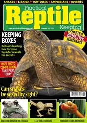 No.40 Box Tortoise issue No.40 Box Tortoise
