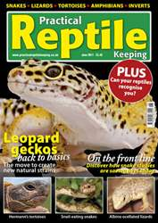 No.25 Natural Geckos issue No.25 Natural Geckos