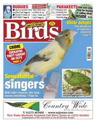 Cage & Aviary 19 December 2012 issue Cage & Aviary 19 December 2012