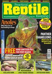 No.49 Panther Chameleons issue No.49 Panther Chameleons