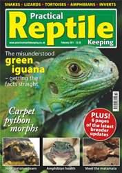 No.21 Iguana's & Python Morphs issue No.21 Iguana's & Python Morphs