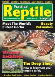 No.7 Beauty Ratsnake issue No.7 Beauty Ratsnake