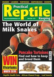 No.10 Milk Snakes issue No.10 Milk Snakes