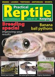 No.16 Banana Ball Pythons issue No.16 Banana Ball Pythons