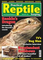 No.8 Rankin's Dragon issue No.8 Rankin's Dragon