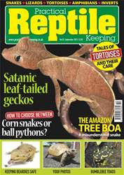 No.53 Satanic leaf-tailed Geckos issue No.53 Satanic leaf-tailed Geckos
