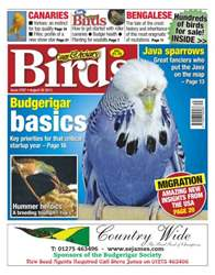 No.5767 Budgerigar basics issue No.5767 Budgerigar basics