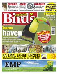 Issue 5768 Toucan haven issue Issue 5768 Toucan haven