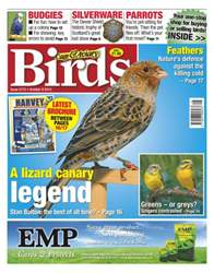 No.5773 A Lizard Canary Legend issue No.5773 A Lizard Canary Legend