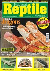 No.58 Bearded dragons - Choosing lighting and substrates issue No.58 Bearded dragons - Choosing lighting and substrates