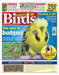 No.5784 A Year in Budgies issue No.5784 A Year in Budgies