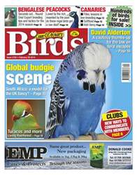 No.5792 Global Budgie Scene issue No.5792 Global Budgie Scene